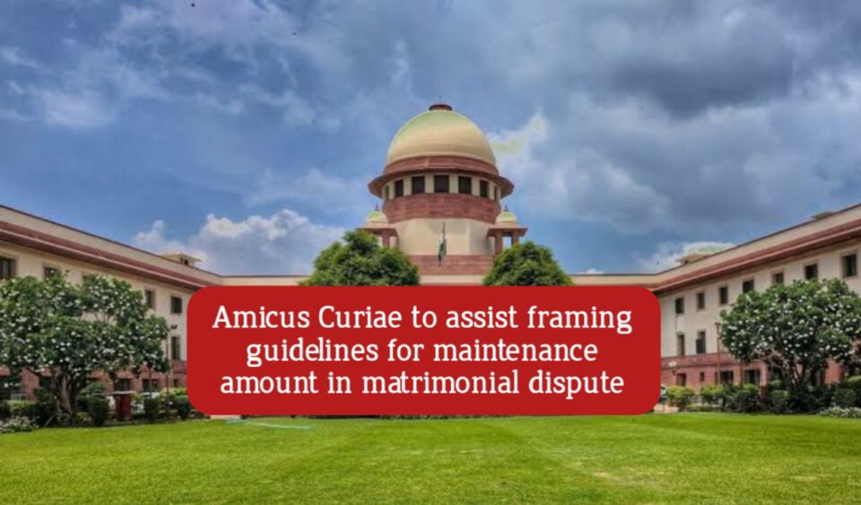Amicus Curiae to frame guidelines for maintenance amount